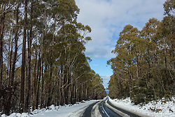 Snow lines the drive down to Great Lake in Tasmania's Central Highlands in winter.