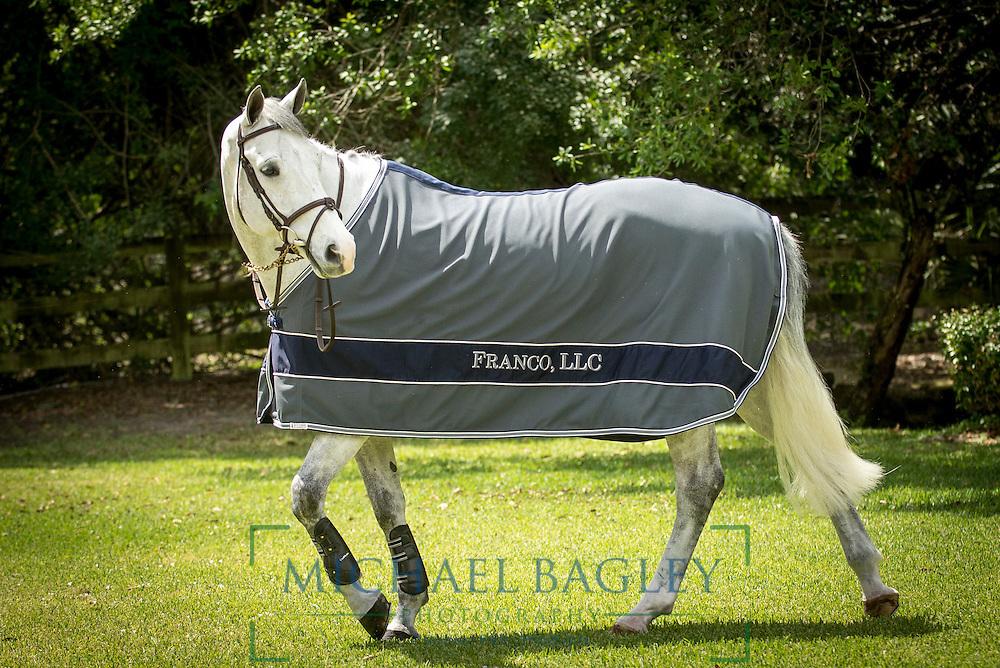 Blue Ribbon Blanket horse blanket