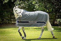 Blue Ribbon Blanket horse blanket