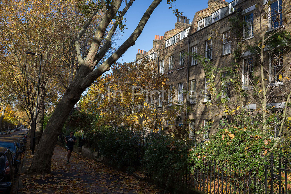 A tall plain tree leans at a significant angle towards period homes on Camberwell Grove, on 11th November 2018, in London, England.