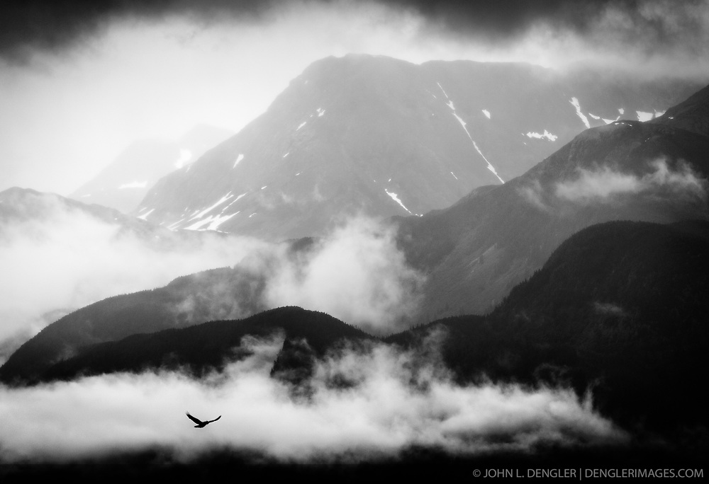 A bird flies above Portage Cove in Haines, Alaska. In the background are mountains of the Coast Range that rise above the Lynn Canal.