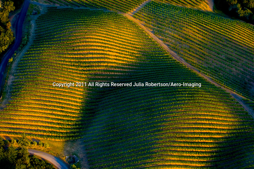 Aerial view of Sonoma Vineyards at sunset.<br /> Abstract of female pregnant figure