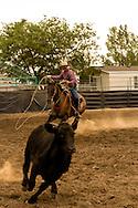 Will James Roundup, Ranch Rodeo, Big Loop, Hardin, Montana, Jess Reid