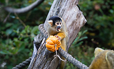 ZSL London Zoo Hallowe'en 25th October 2018