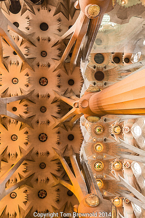 Looking up to the ceiling of the Sagrada Familia, Barcelona Spain.