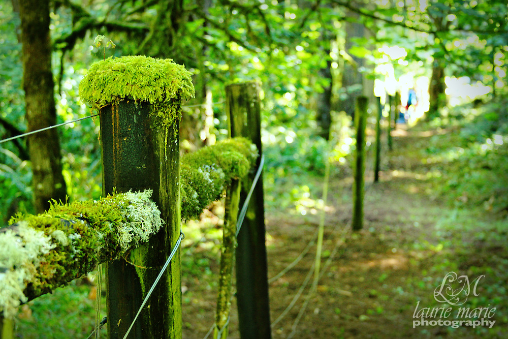 Old, moss covered wooden fence in the middle of a forested hill