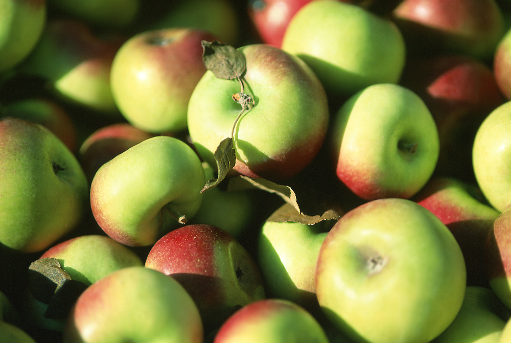 Close up selective focus photograph of a pile of Lady Apples