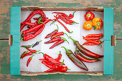 Mixed chilli peppers harvested into cardboard boxes. Variety names written next to chilies