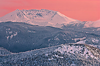 Mount St Helens caldera and forests in alpenglow evening light with the Gifford Pinchot National Forest covered in fresh snow, viewed from forty miles away in the Tahoma State Forest of Washington, USA