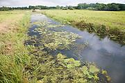 Drainage channel ditch in marshland at Geldeston marshes, Suffolk, England