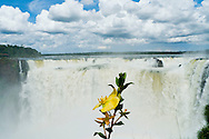 Iguazu Falls on January 3, 2011 in Argentina.