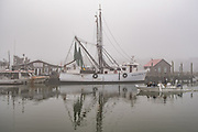 Shrimp boats tied up to dock on a foggy winter morning on Shem Creek in Charleston, South Carolina.