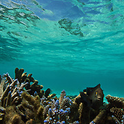 Snorkling in the lagoon