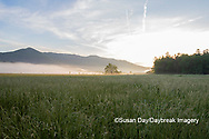 66745-04903 Sunrise and fog Cades Cove Great Smoky Mountains National Park TN