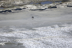 A solitary wild horse passes badly-eroded sand dunes on Cumberland Island after Hurricane Irma passed on Tuesday, September 12, 2017, on the Georgia coast. Photo by Curtis Compton/Atlanta Journal-Constitution/TNS/ABACAPRESS.COM