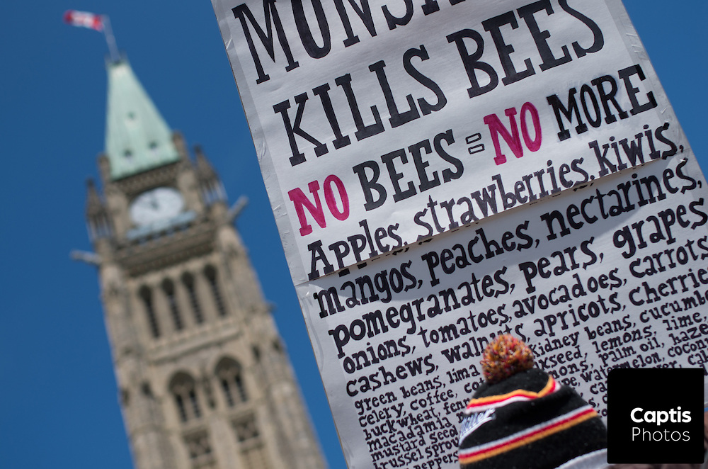 A man holds a sign listing produce that bees help to pollinate in front of the Peace Tower on Parliament Hill. May 31, 2014.