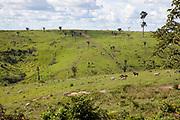 Amazonian deforestation for cattle farming