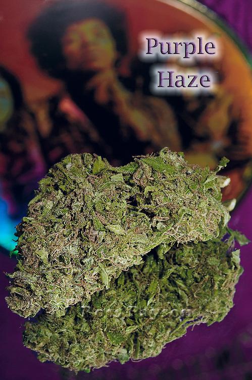 Purple Haze nug photo shot in a professional photography studio.