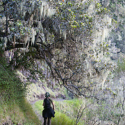 Hiker on the trail to Col du Taibit Pass, the trail between Cirque de Cilaos and Cirque de Mafate