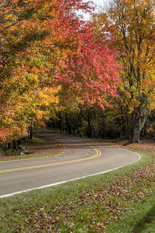A few fall colors along the road leading to the Homestead Area at Grayson Highlands State Park in Mouth of Wilson, VA on Tuesday, October 15, 2013. Copyright 2013 Jason BarnetteA few fall colors along the road leading to the Homestead Area at Grayson Highlands State Park in Mouth of Wilson, VA on Tuesday, October 15, 2013. Copyright 2013 Jason Barnette<br /> <br /> The Homestead Area at Grayson Highlands State Park features several rustic buildings that were once part of a frontier homestead, a few picnic shelters, several picnic areas, and a stage for performances throughout the year.