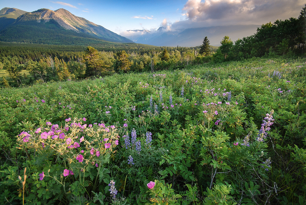 Castle Wildland Wildflowers