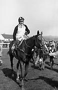 """Racing At Punchestown. K22.<br /> 1976.28.04.<br /> 1976.04.28.<br /> 1976.<br /> 28th April 1976.<br /> <br /> The John Jameson Cup race was run on this day at Punchestown. The sponsor of the race is Irish Distillers Ltd. The race, an extended handicap novice steeplechase, is for horses that are four years old or above that have not won a steeplechase on or before 1st Sept.,75. The race was won by """"No Hill"""" owned by Mrs J. B. O'Callaghan, ridden by Mr T. M. Walsh and trained by Mr R Walsh. Image shows """"No Hill"""" under jockey T. M. Walsh being led to the winners' enclosure."""