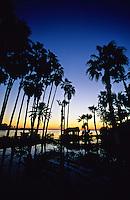 Estuary of San Jose, San Jose Del Cabo, Los Cabos, Baja California, Mexico