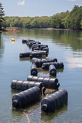 Floating Oyster Trays, Sasanoa River