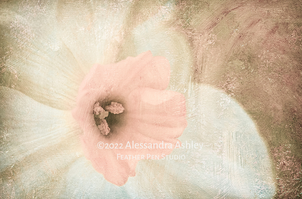 Small-cupped narcissus in macro view, blended with canvas texture and painted effects.