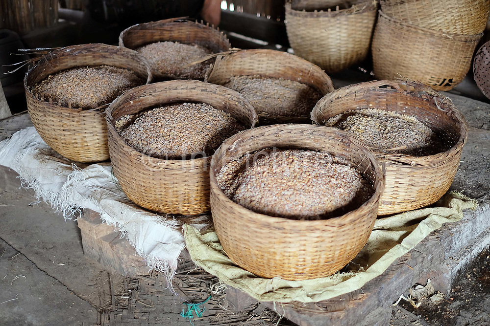 Soya beans fermenting in bamboo baskets at Kaungdine village on 22nd January 2016 in Shan State, Myanmar. Kaungdine village is situated by Inle lake and is well known for producing various popular snacks