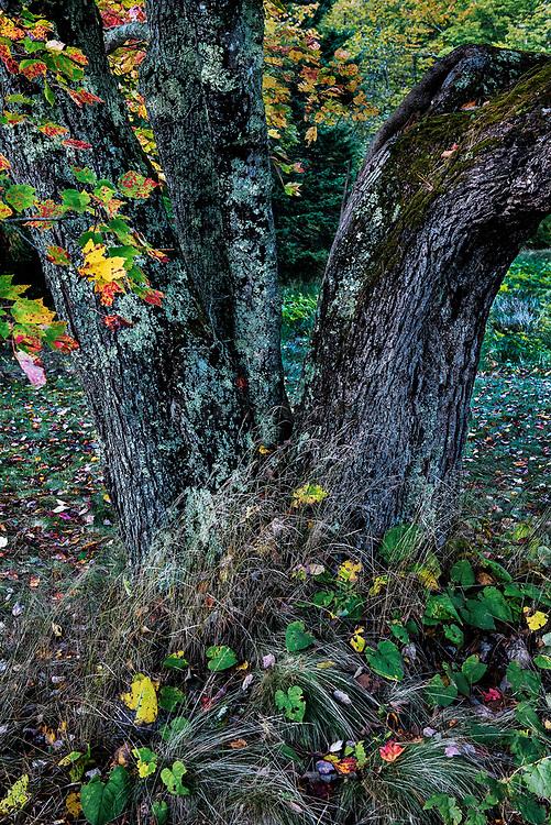 Autumn tree trunk.