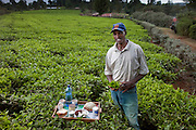 Kibet Serem, a tea plantation farmer, with his day's worth in his tea plantation near Kericho, Kenya. (From the book What I Eat: Around the World in 80 Diets.) The caloric value of his typical day's worth of food in the month of February was 3100 kcals. He is 25 years if age; 5 feet, 11 inches tall; and 143 pounds. He cares for this small tea plantation that his father planted on their property when Kibet was a young boy. He is responsible for milking the cows that his family owns. He sells extra milk to a nearby school for a government feeding program and gives some to his mother who makes yogurt and sells it. His staple food is ugali, a maize meal porridge. MODEL RELEASED.