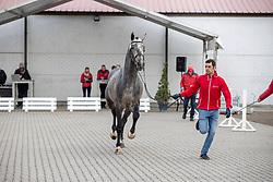 138, Domingo van't Laar Z<br /> Hengstenkeuring BWP- Azelhof - Lier  2021<br /> <br /> © Hippo Foto - Dirk Caremans<br /> 12/04/2021