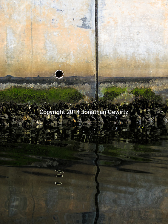 The mussel-encrusted concrete wall of a Miami Beach, Florida canal.<br /> WATERMARKS WILL NOT APPEAR ON PRINTS OR LICENSED IMAGES.