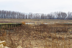 Emiquon Nature Preserve and Wildlife Refuge -  A walk bridge leads across a marsh and grassy area from the parking lot to a viewing stand on mostly cloudy day in central Illinois