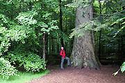 Urwald, Hans-Watzlik-Hain, Zwieseler Waldhaus, Bayerischer Wald, Bayern, Deutschland | Hans-Watzlik-Hain, Zwieseler Waldhaus, Bavarian Forest, Bavaria, Germany