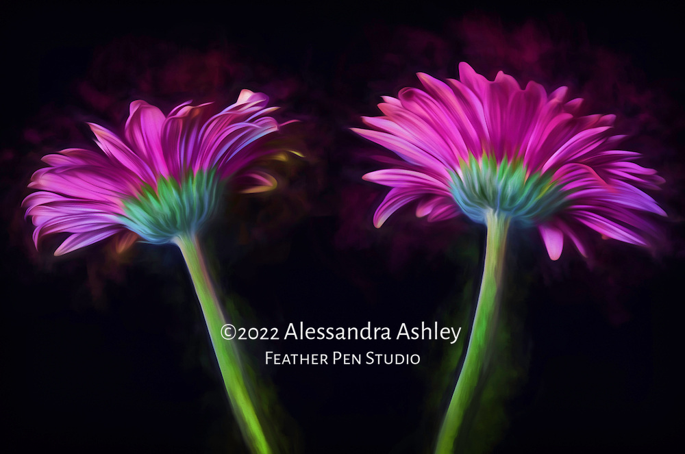 Twin gerbera daisies on black background appear as though lit from within and exuding colors.  Watercolor effects blended with photorealism.