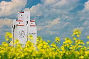 Grain elevator and canola flowers. Culross, manitoba