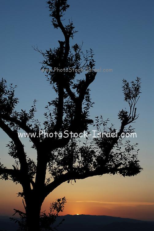 India, landscape of the Himalayan mountain range at sunset