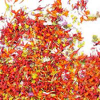 Flowerart: irish Wildflowers / fa021