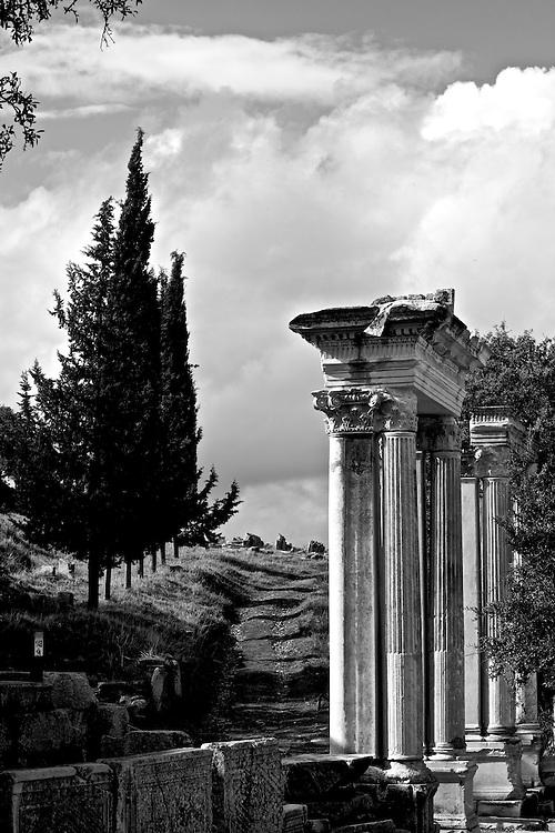 Ephesus columns and trees