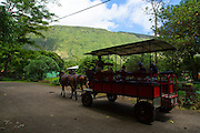 Horse cart tour, Waipio Valley, Hamakua Coast, Island of Hawaii