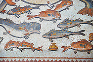 Fish from the 3rd century Roman mosaic villa floor from Lod, near Tel Aviv, Israel. The Roman floor mosaic of Lod is the largest and best preserved mosaic floor from the levant region along the eastern Mediterranean coast. It is unclear whether the owners were Jewish, Christian or pagan but either way they would have been wealthy to own such a magnificent floor. The Shelby White and Leon Levy Lod Mosaic Centre, Lod, Israel. .<br /> <br /> If you prefer to buy from our ALAMY STOCK LIBRARY page at https://www.alamy.com/portfolio/paul-williams-funkystock/roman-mosaic.html . Type -    lod  - into LOWER SEARCH WITHIN GALLERY box - Refine search by adding a subject, place, background colour, museum etc.<br /> <br /> Visit our ROMAN WORLD PHOTO COLLECTIONS for more photos to download or buy as wall art prints https://funkystock.photoshelter.com/gallery-collection/The-Romans-Art-Artefacts-Antiquities-Historic-Sites-Pictures-Images/C0000r2uLJJo9_s0