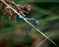 Dragonfly. Image taken with a Nikon D6 camera and 80-400 mm VR lens.