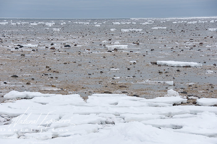 Open water of Hudson Bay in late November. Cape Churchill, Manitoba.