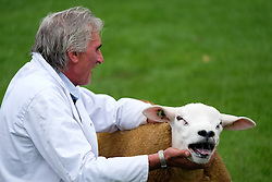 © Licensed to London News Pictures.14/07/15<br /> Harrogate, UK. <br /> <br /> A man holds his sheep steady as judging takes place on the opening day of the Great Yorkshire Show.  <br /> <br /> England's premier agricultural show opened it's gates today for the start of three days of showcasing the best in British farming and the countryside.<br /> <br /> The event, which attracts over 130,000 visitors each year displays the cream of the country's livestock and offers numerous displays and events giving the chance for visitors to see many different countryside activities.<br /> <br /> Photo credit : Ian Forsyth/LNP