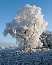 © under license to London News Pictures. 07/12/2010. An amazing 'ice tree' in a field in Pailton, warwickshire today (Tuesday) After a day of freezing fog and a night where temperatures reached -10, this morning revealed a beautiful frost covered landscape, Pailton, Warwickshire . Picture credit should read Sam Spickett/London News Pictures