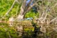 Damselfly<br />