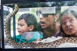 Family examining snakes, Mitchell Lake Audubon Center, San Antonio, Texas, USA.
