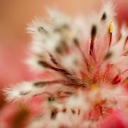 focus on pollen